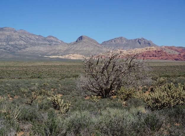 drought on the desert Mojave