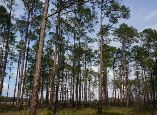 forestry in SE U.S.