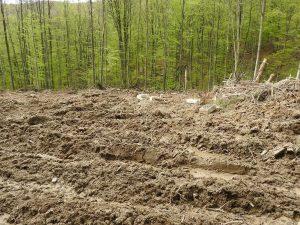 Zręby zupełne królują w PGL Lasy Państwowe.