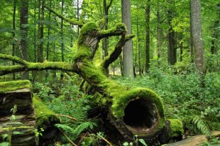Motywacje leśników a Białowieski Park Narodowy.