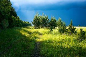 Kolejna burza leśna Lasów Państwowych.