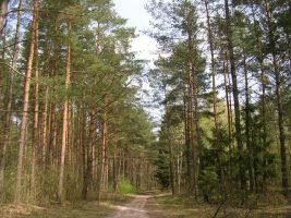 Jak pisać o polskim lesie?