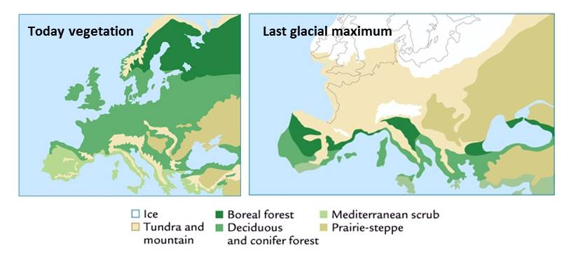 The Return Of The Forest How Trees Reconquered The European