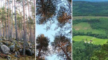 Szwedzki urząd leśny o pożytkach z lasu.