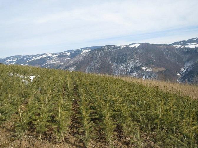 reforestation