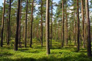 Izby Leśne kierowane przez Lasy Państwowe