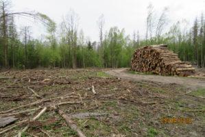 Cięcia w Puszczy Białowieskiej wpłynęły na tereny chronione.