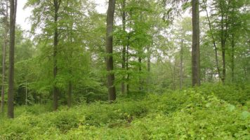 Leśne Gospodarstwa Węglowe