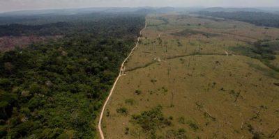 Wylesianie na Ziemi