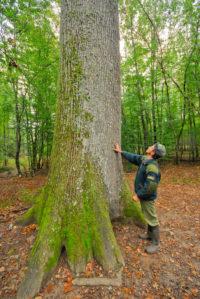 Lasy publiczne Francji
