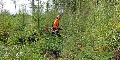 Czy firmy leśne przeżyją