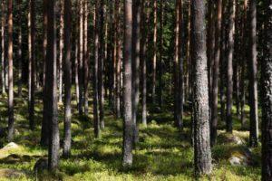gospodarka leśna