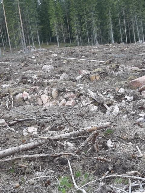 Polscy robotnicy leśni w Szwecji