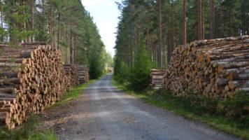czy starczy nam lasu?