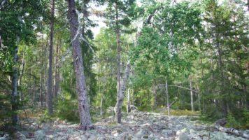 Przekazanie lasu