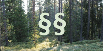 Lasy Państwowe a ustawa o lasach