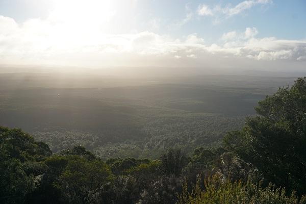 fundusz leśny Tasmania