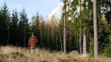 Problemy leśnika