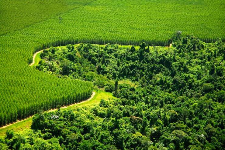 lasy wielofunkcyjne czy jednofunkcyjne