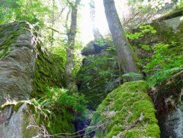 Projekt 13 parków narodowych