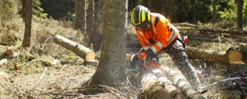 Usługi leśne