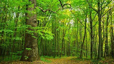 Czy leśnictwo
