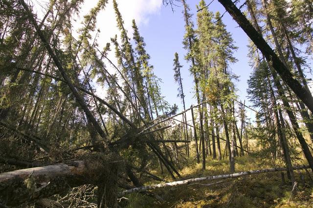 Cuando el bosque se emborracha