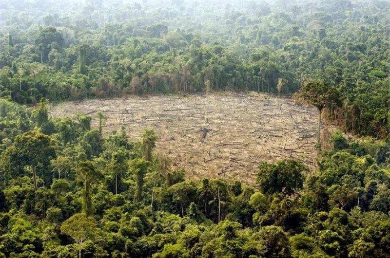 Risultati immagini per deforestazione amazzonia