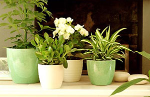 Indoor Plants 02