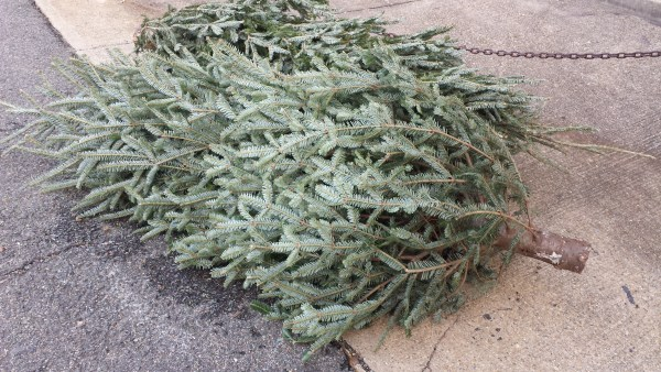 DPW requires apartment buildings and condos to provide collection services for Christmas trees.