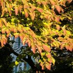 Fall's paintbrush could arrive early in DC