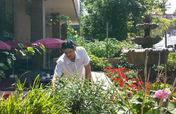 Uzi Turker working in Acacia's patio garden. (photos by Marlene Berlin)