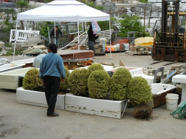 This spring sale even had salvaged plants.