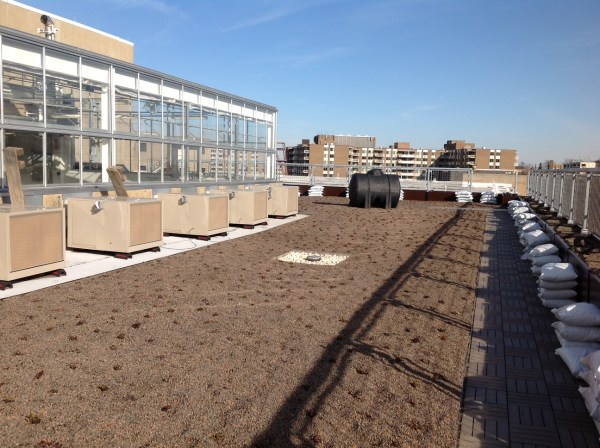 The Building 44 rooftop, facing east toward Connecticut Avenue. Seen here: Part of the extensive green roof planted temporarily in sedum with a drain in the center. The greenhouse is on the left, with five of six measurement modules visible outside. The white bags stacked in front of the planter boxes along the periphery are filled with planting medium. The black cistern in background awaits installation. (Photo courtesy of CAUSES/UDC)