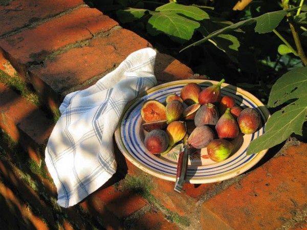 """Figs at Evermay,"" digital photo, by Ann Elkington"