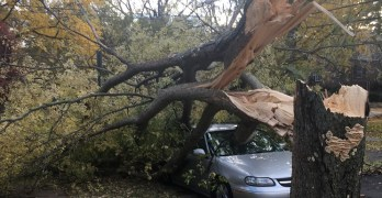 When street trees fall, DDOT's foresters move fast