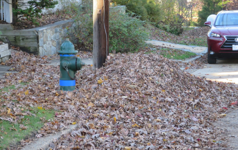 This pile of leaves will be picked up by the city. Do you really want to let it go?
