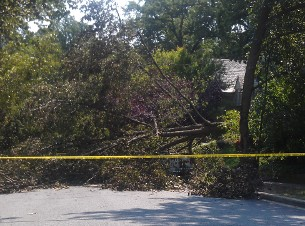 A tree down on Linnean Street after the late June 2012 derecho. Having underground power lines could have prevented homes in Forest Hills from losing power for five days, and more, last summer.