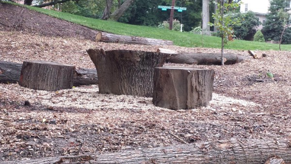 Linnean tree trunk benches and table.