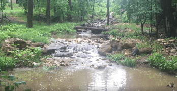 Video: A rainstorm wakes up the sleepy Linnean stream