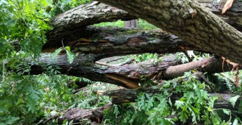 Downed trees quickly cleared from Soapstone and Melvin C Hazen trails