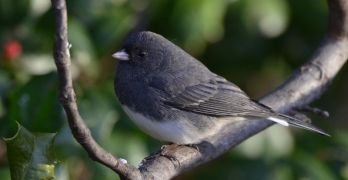 Backyard nature: Winter is for the birds