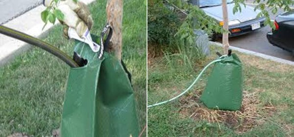 filling a tree water bag and full bag
