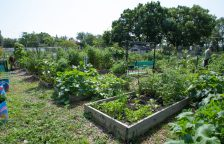 Urban farmers work on their garden plots at the Forest Park Community Garden on Saturday. | Photo by Jennifer T. Lacey