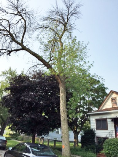 Forest Park is losing trees, but not to the sam extent as other communities. | Courtesy John Doss