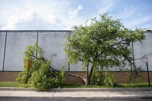 A tree blown over by high winds outside of the Forest Park Plaza shopping center during the May 31 storm. (Photo by William Camargo)