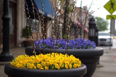 Flowers are displayed along the sidewalks on Monday, May 14, on Madison Street throughout downtown Forest Park. | Alexa Rogals/Staff Photographer