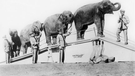 """Heavy weight: Arthur and Joseph Dierickx support elephants as part of their """"strongman"""" circus act. 