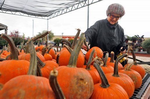 Mary Ann Geraci picks out a pumpkin.   Sarah Minor/Contributor