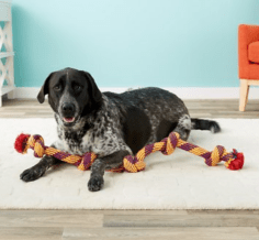 Mammoth Floss Chews Rope Tug